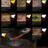 Venomous Snakes of NSW Poster