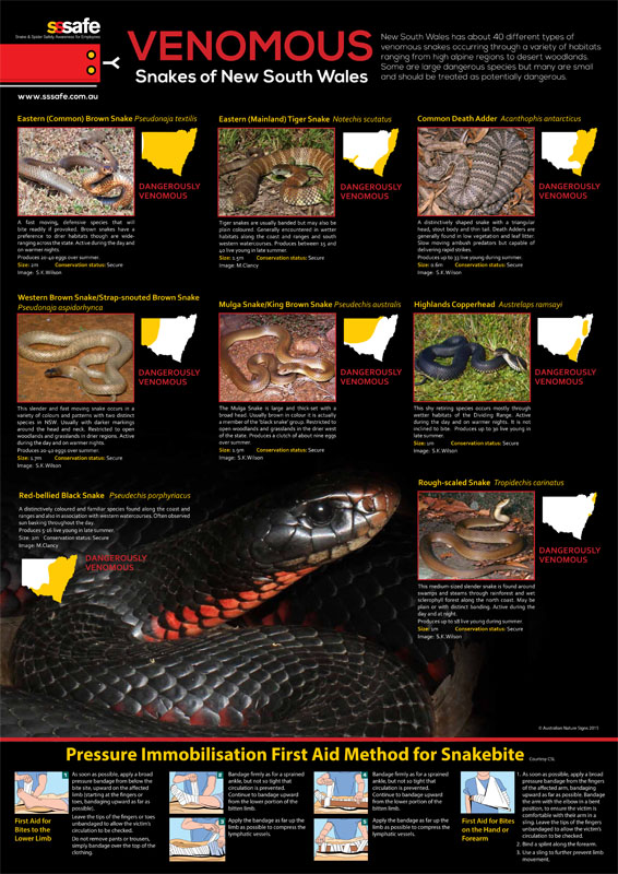 Venomous Snakes of NSW Poster