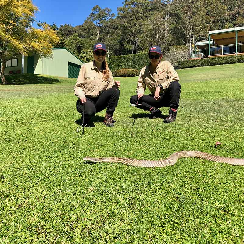 Snake Relocation Courses